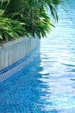 Groene installatie naast van zwembad Stock Foto's