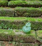 Groene installatie op baksteen stock afbeelding