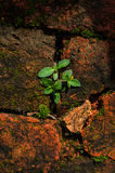 Groene installatie op behangachtergrond Royalty-vrije Stock Foto