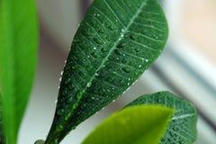 Groene installatie op een venster Stock Fotografie