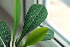 Groene installatie op een venster Stock Foto's