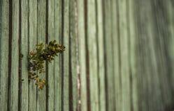 Groene installatie tegen de achtergrond van een groene houten omheining Royalty-vrije Stock Afbeelding