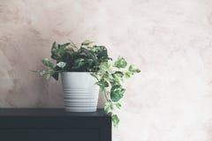 Groene installatie in vaas binnenlands ontwerp stock foto