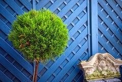 Groene installatie voor een blauwe omheining stock foto