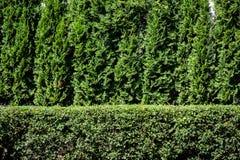 Groene installatieachtergrond Stock Foto
