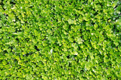 Groene installatieachtergrond Royalty-vrije Stock Foto's