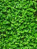 Groene installatieachtergrond Stock Fotografie