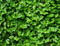 Groene installatieachtergrond Royalty-vrije Stock Afbeelding