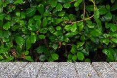 Groene installatieachtergrond met concrete blokvloer royalty-vrije stock afbeelding