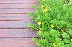Groene installatieklimmer met het gele bloemen groeien over en concrete gang in de textuur van plankpatronen voor natuurlijke ach royalty-vrije stock afbeelding