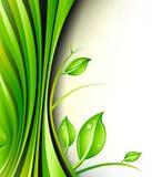 Groene installatieontwerp Stock Foto