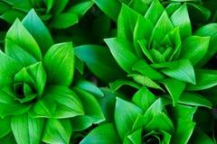 Groene installaties Royalty-vrije Stock Afbeeldingen