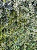 Groene installaties Royalty-vrije Stock Afbeelding
