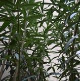 Groene installaties Stock Foto