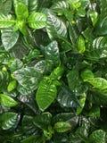 Groene installaties Stock Afbeelding