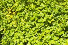 Groene installaties als achtergrond Stock Foto's