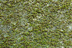 Groene installaties in bos Royalty-vrije Stock Foto's