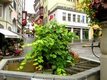 Groene installaties in de stad Stock Afbeeldingen