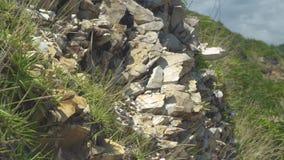 Groene installaties die op stenen van bergklip groeien Sluit omhoog steenachtige textuur van rotsachtige klip en groene installat stock video