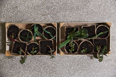 Groene installaties in een houten doos Royalty-vrije Stock Foto's