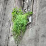 Groene installaties in een oud venster sil royalty-vrije stock foto's