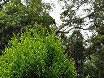 Groene installaties en bomen, 100% aard @ Avila berg, Caracas - Venezuela Stock Fotografie