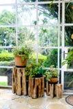 Groene installaties op boomstamstomp binnen serre die door s worden gebaad Stock Fotografie