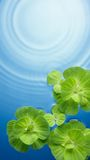 Groene installaties op water Stock Foto