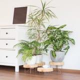 Groene installaties in wit ruimte modern ontwerp royalty-vrije stock foto's