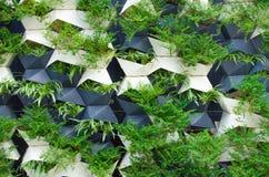 Groene installatiesmuur Stock Afbeelding