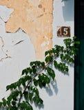 Groene Ivy Plant Growing op Muur van de Schil de Witte Gipspleister, Griekenland stock fotografie