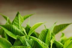 Groene jonge bladeren op een houten achtergrond Donkere houten achtergrond met exemplaarruimte Grens Stock Foto