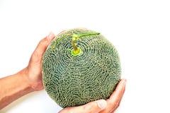 Groene kantaloep op handenbeeld op een witte achtergrond stock foto