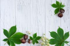 Groene kastanjebladeren, kastanjes en bloemen op een lichte houten achtergrond Kader voor de tekst van de groetkaart Bannerontwer stock afbeelding