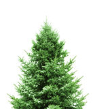 Groene Kerstboom Stock Fotografie