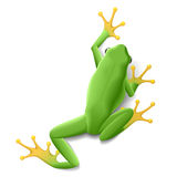 Groene kikker Stock Fotografie