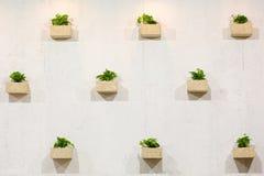 Groene kleine installaties Royalty-vrije Stock Afbeeldingen