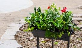 Groene kleine installaties met rode bloem in boompot voor openluchtdecoratie stock foto