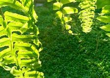 Groene kleur die van zonlicht verschillend is stock foto