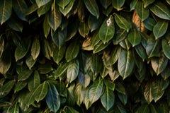 Groene kleur van schoonheid royalty-vrije stock afbeelding