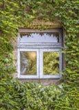 Groene klimop rond het venster Royalty-vrije Stock Afbeelding