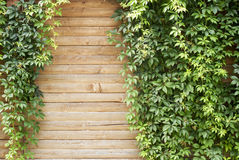Groene klimplantinstallatie Stock Foto