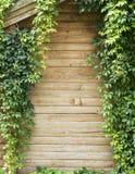 Groene klimplantinstallatie Stock Foto's