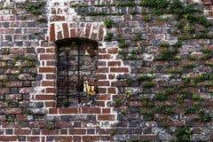 Groene klimplantinstallatie op een oude rode bakstenen muur Stock Foto