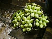 Groene knoplotusbloem Stock Afbeelding