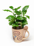 Groene koffie royalty-vrije stock fotografie