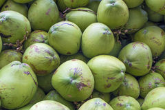Groene kokosnoot Royalty-vrije Stock Foto's