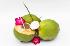 Groene kokosnoten stock afbeelding