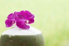 Groene kokosnoten met Orchidee Stock Fotografie