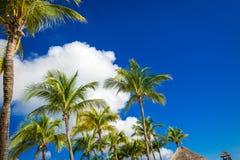 Groene kokosnotenpalmen op donkerblauwe hemel met witte wolken Pho Royalty-vrije Stock Foto's